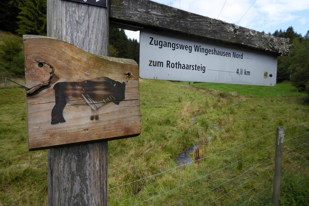 Wisent Wanderung bei Jagdhaus 28082014_07