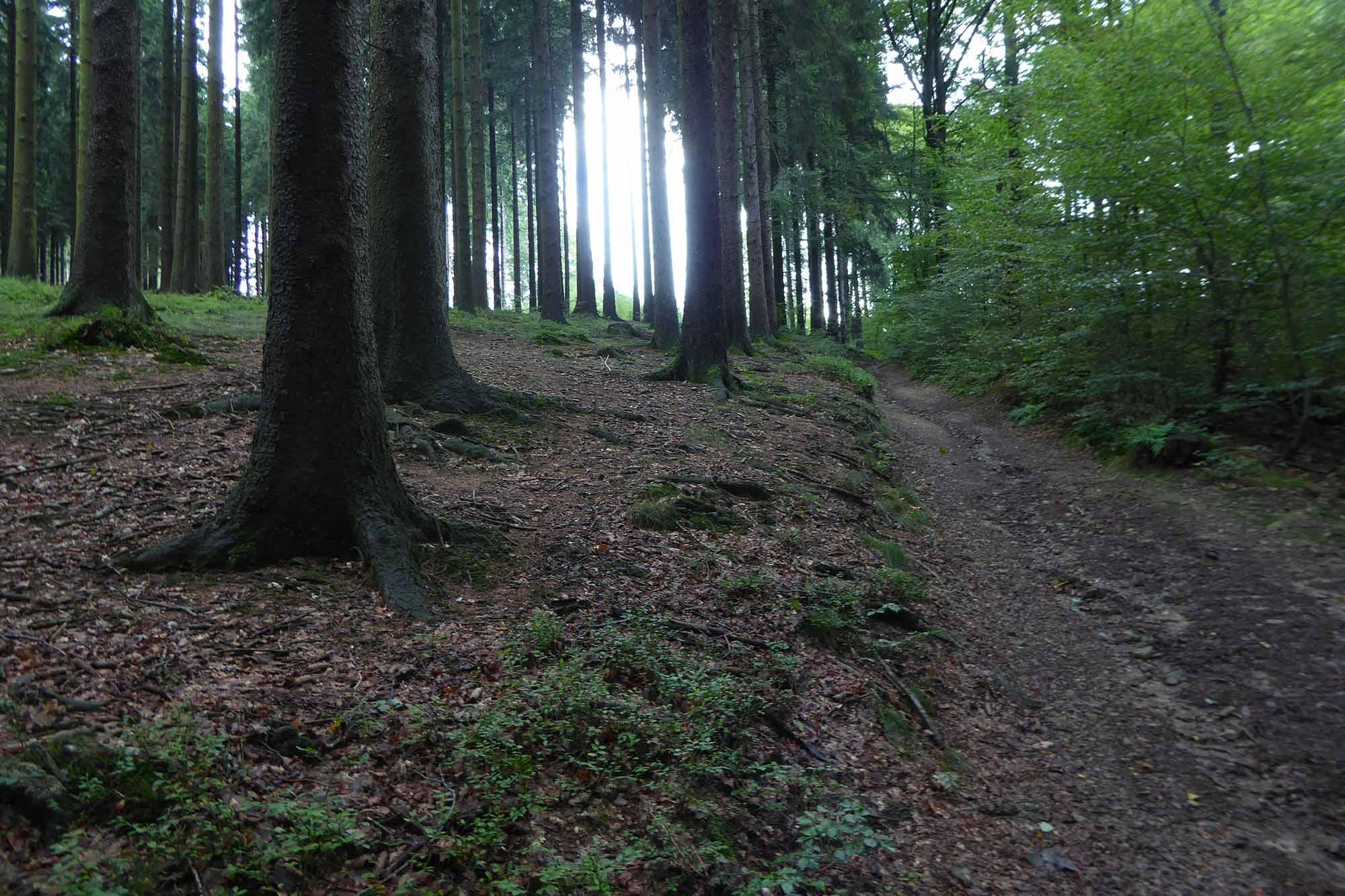 Interessant Jugendzimmer Wald ~ Es wird wieder interessant im wald die schlenderer