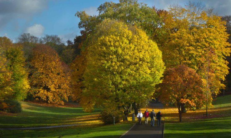 rombergpark-herbst-2016-29102016_13